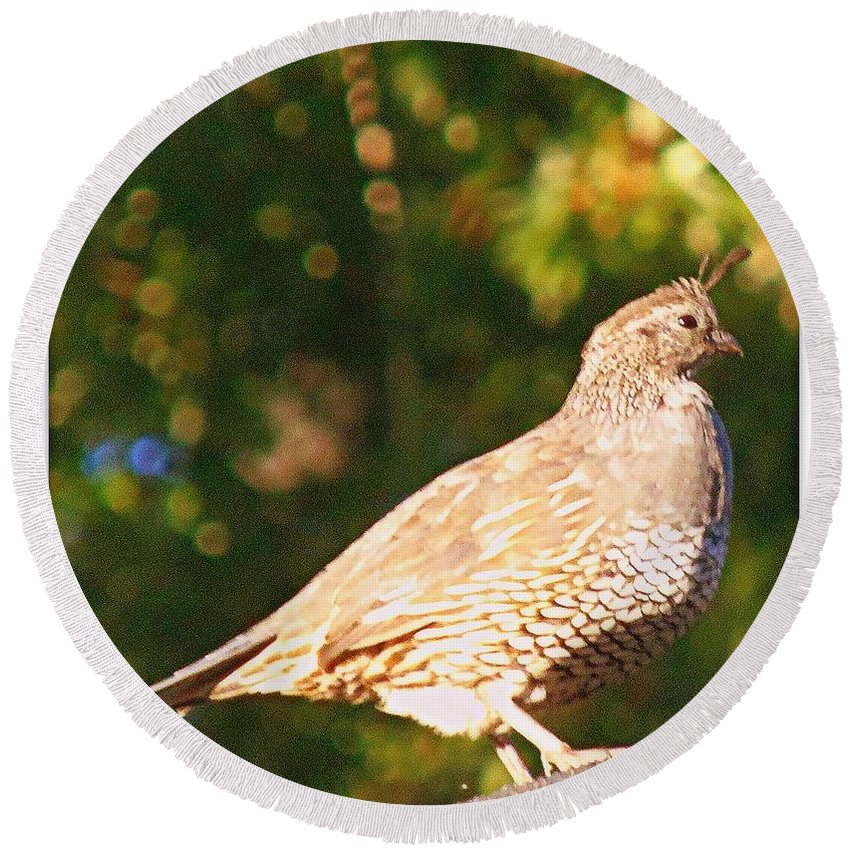 Acrylic Prints Round Beach Towel featuring the photograph Quail Look Out by Bobbee Rickard