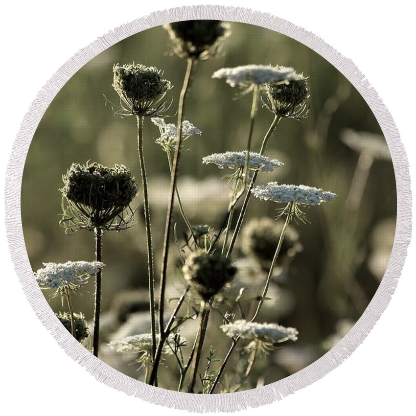 Queen Round Beach Towel featuring the photograph Queen Annes Lace - 1 by Kenny Glotfelty