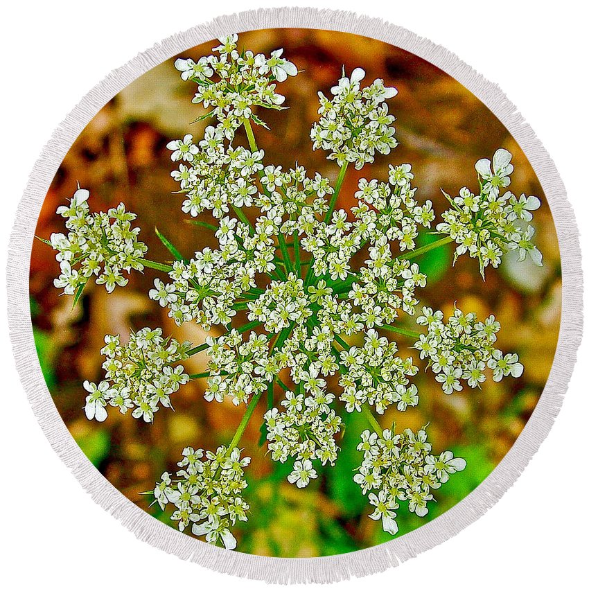 Queen Anne's Lace Or Wild Carrot Near Alamo Round Beach Towel featuring the photograph Queen Anne's Lace Or Wild Carrot Near Alamo-michigan by Ruth Hager