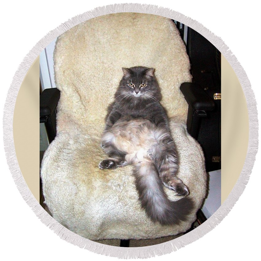Cat Round Beach Towel featuring the photograph Queenie As An Executive by Jussta Jussta