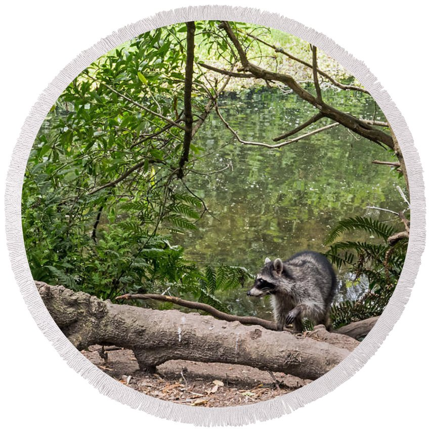 Animal Round Beach Towel featuring the photograph Raccoon At The Lake by Kate Brown