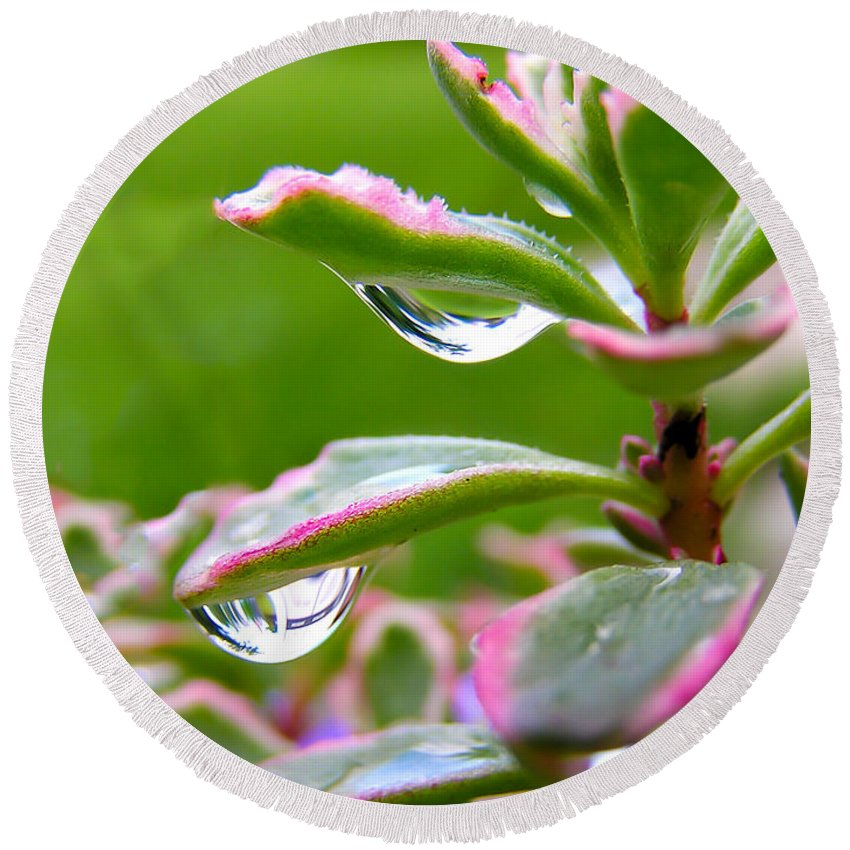 Raindrops On Sedum Round Beach Towel featuring the photograph Raindrops On Sedum by Cynthia Woods