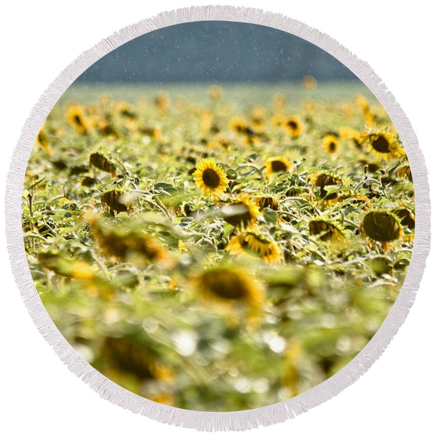 Sunflowers Round Beach Towel featuring the photograph Rain On The Sunflowers by Cheryl Baxter