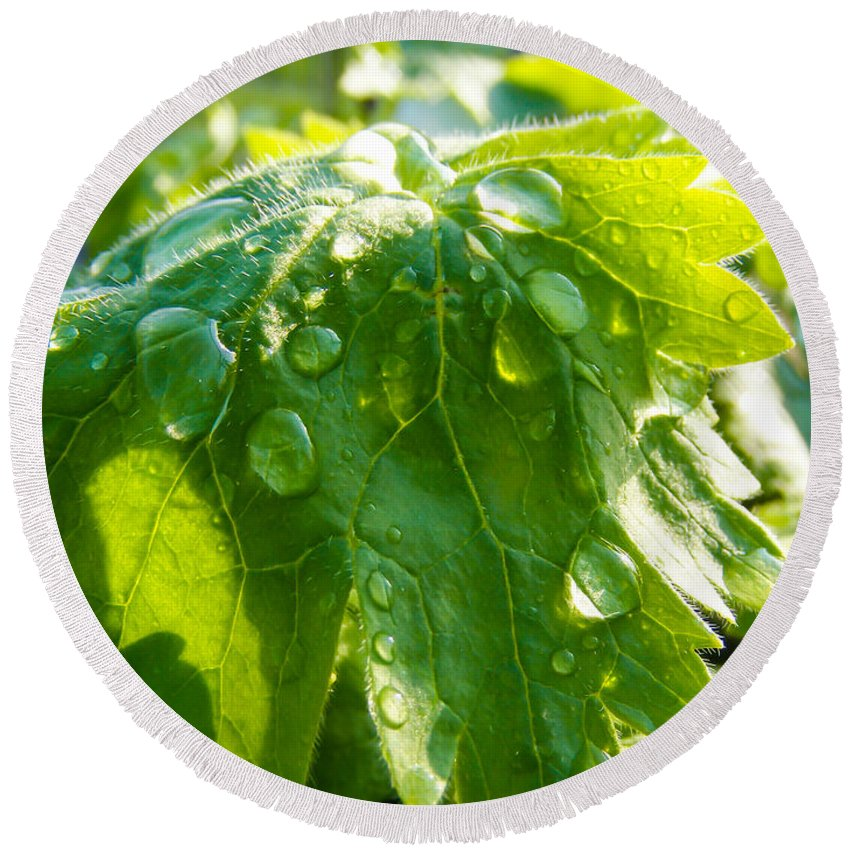 Rain Soaked Leaf Round Beach Towel featuring the photograph Rain Soaked Leaf by Cynthia Woods
