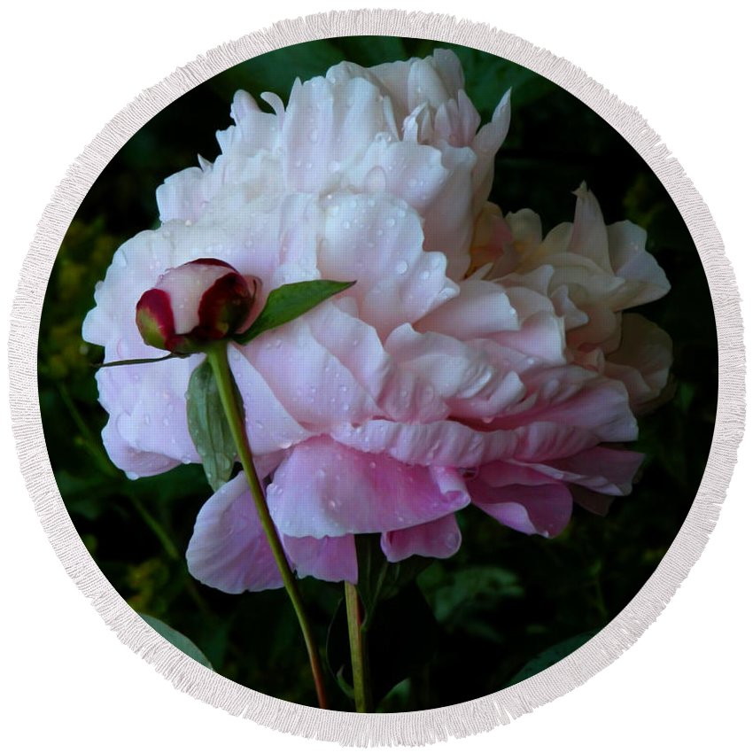 Peony Round Beach Towel featuring the photograph Rain-soaked Peonies by Rona Black