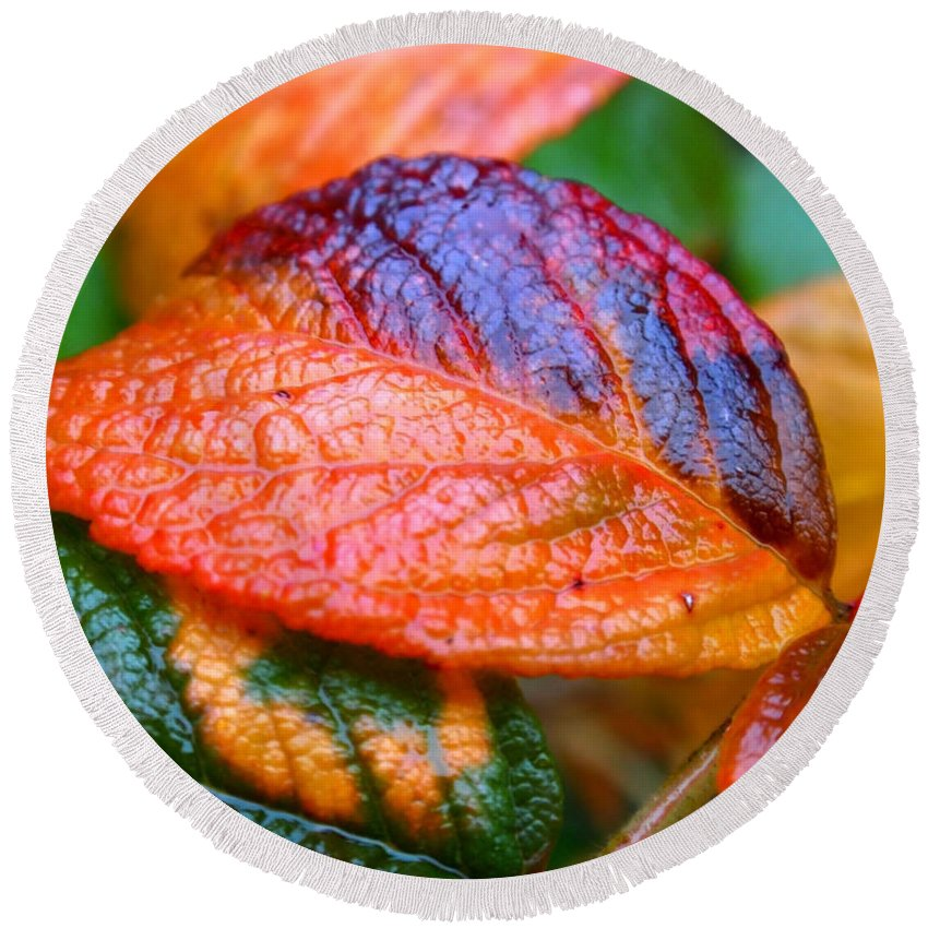 Leaf Round Beach Towel featuring the photograph Rainy Day Leaves by Rona Black