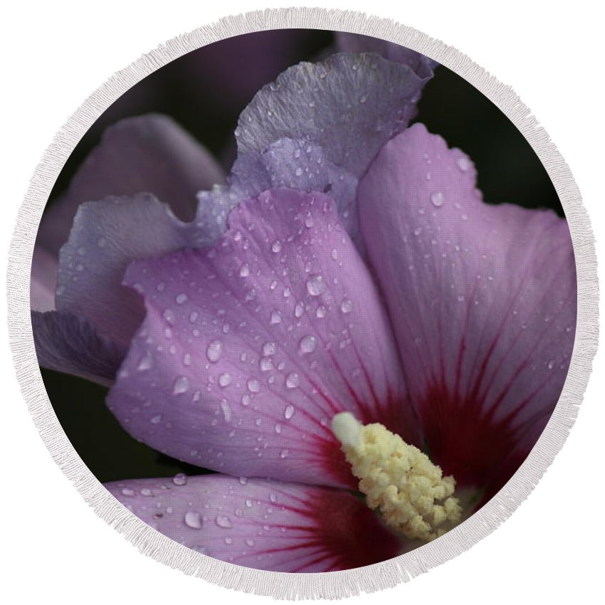 Rose Of Sharon Round Beach Towel featuring the photograph Rainy Day Sharon by Jennifer E Doll