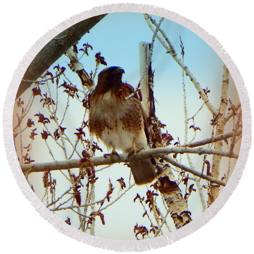 Acrylic Prints Round Beach Towel featuring the photograph Raptor Perched by Bobbee Rickard