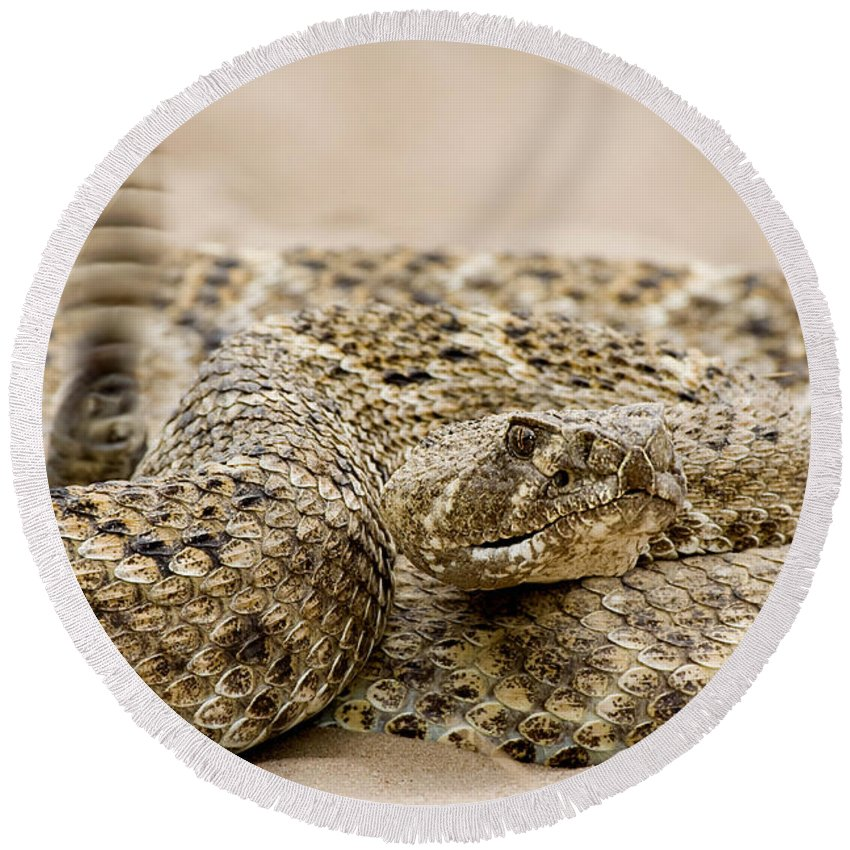 Rattlesnake Round Beach Towel featuring the photograph Rattlesnake 1 by Jerry Fornarotto