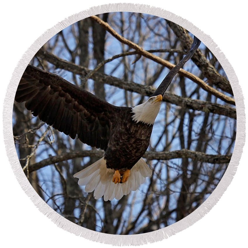 Maine Wildlife Round Beach Towel featuring the photograph Ready For A Landing by Sharon Fiedler