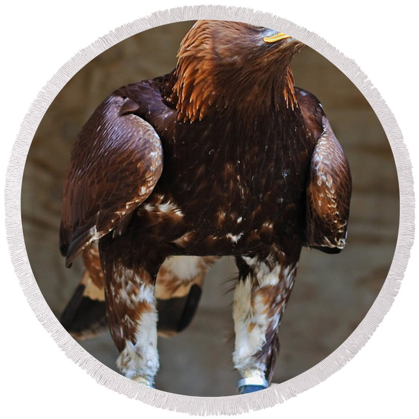 Bird Of Prey Cotswold Falconry Centre Golden Eagle Round Beach Towel featuring the photograph Ready To Go by Richard Gibb