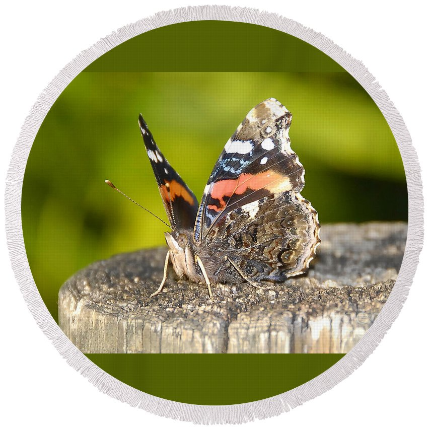 Red Admiral Butterfly Round Beach Towel featuring the photograph Red Admiral Butterfly by David Lee Thompson