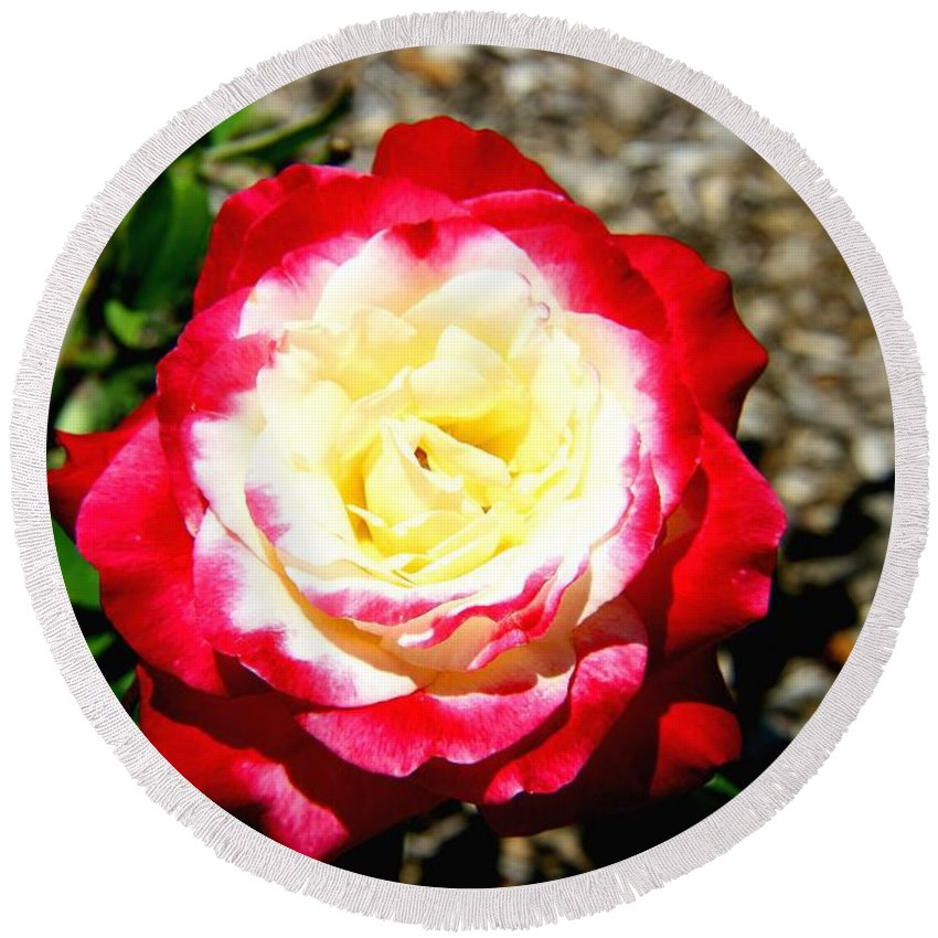 Red Round Beach Towel featuring the photograph Red And White Rose by Darren Burton