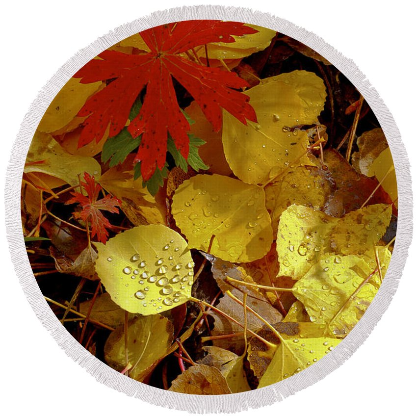 San Juan Mountains Colorado Autumn Leaves Fall Foliage Red Aspen Leaf Yellow Rain Drops Drop Still Life Round Beach Towel featuring the photograph Red And Yellow by Bob Phillips