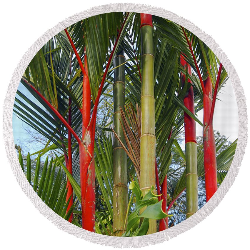 Arena Volcano Region Costa Rica Red Bamboo Tree Trees Leaf Leaves Nature Round Beach Towel featuring the photograph Red Bamboo by Bob Phillips