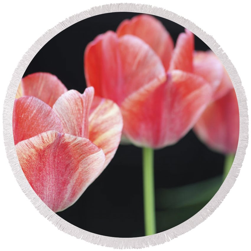 Tulip Round Beach Towel featuring the photograph Red Beauty by Christina Gupfinger