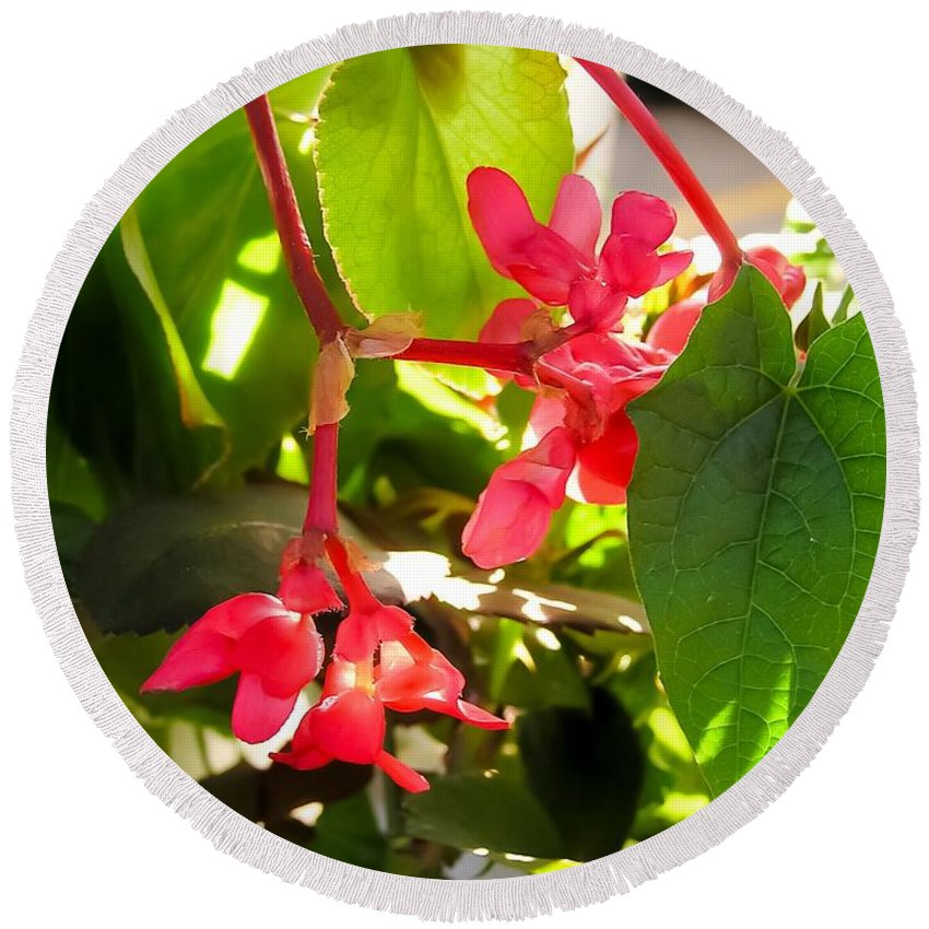 Red Begonia Peaking Through The Leaves Round Beach Towel featuring the photograph Red Begonia Peaking Through The Leaves by Cynthia Woods