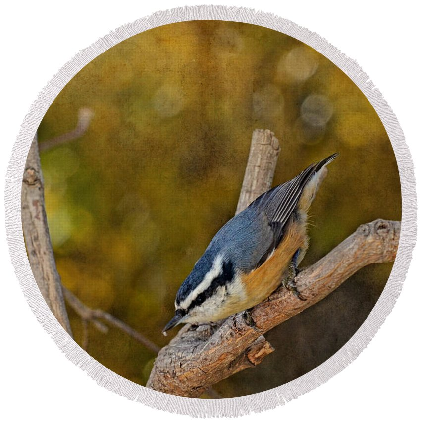 Nature Round Beach Towel featuring the photograph Red Breasted Nuthatch by Debbie Portwood