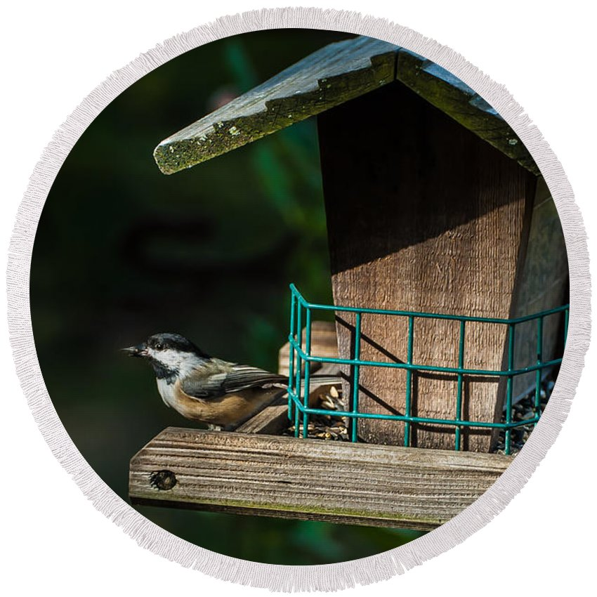 Red-breasted Nuthatch Round Beach Towel featuring the photograph Red-breasted Nuthatch by Onyonet Photo Studios