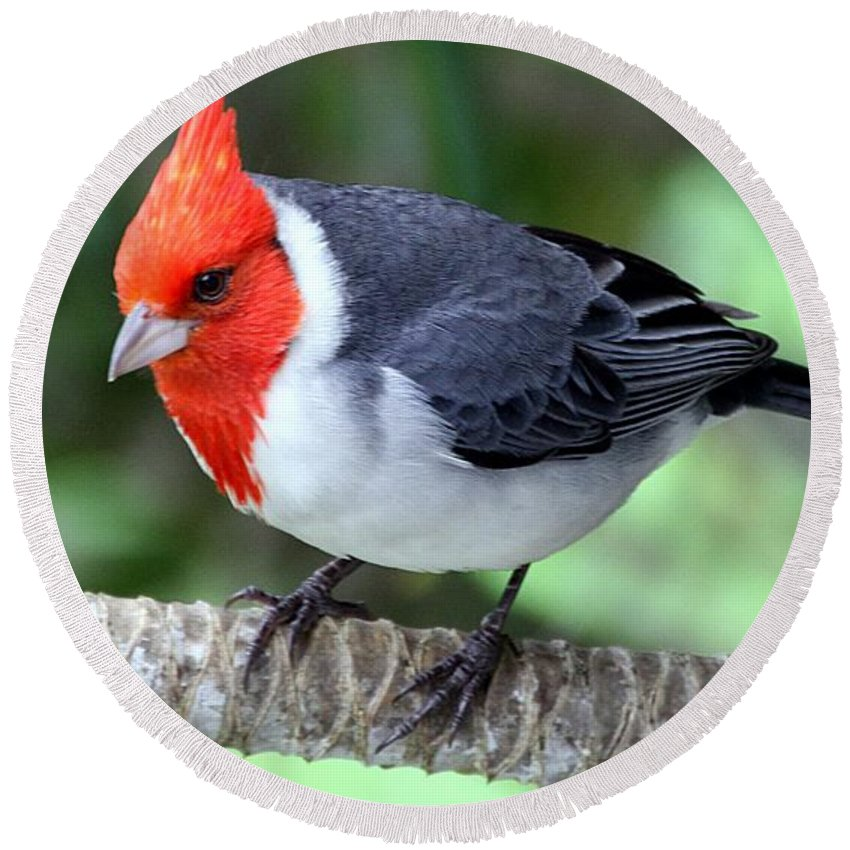 Red Crested Cardinal Round Beach Towel featuring the photograph Red Crested Cardinal by Elizabeth Winter