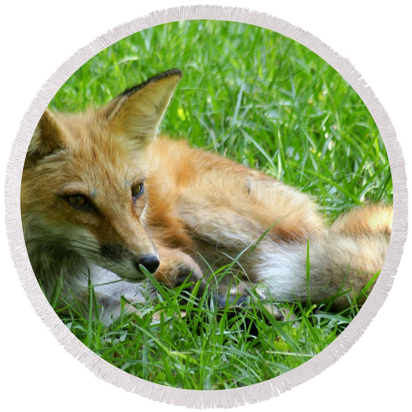Fox Round Beach Towel featuring the photograph Red Fox Resting by Larry Allan