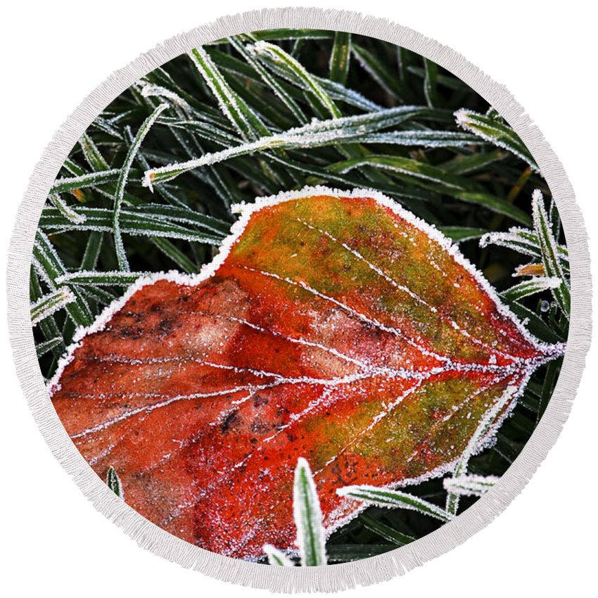 Frost Round Beach Towel featuring the photograph Red Frosty Leaf On Frozen Ground by Elena Elisseeva