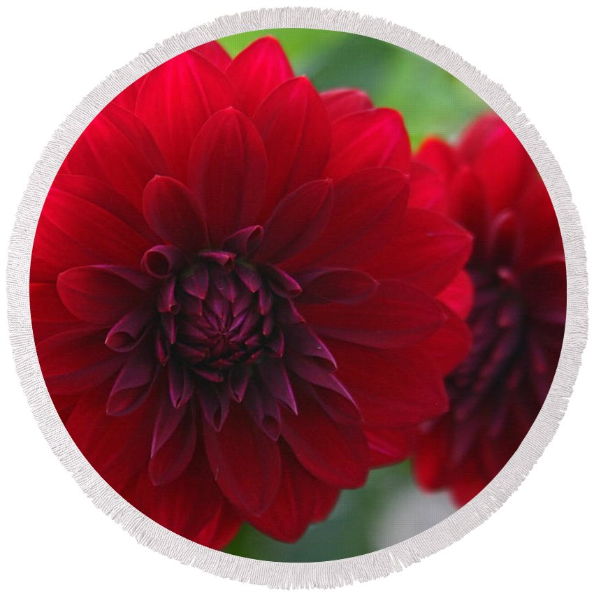 Flowers Round Beach Towel featuring the photograph RED by Hugh Carino