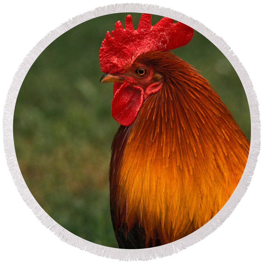 Animal Round Beach Towel featuring the photograph Red Jungle-fowl by Ron Sanford
