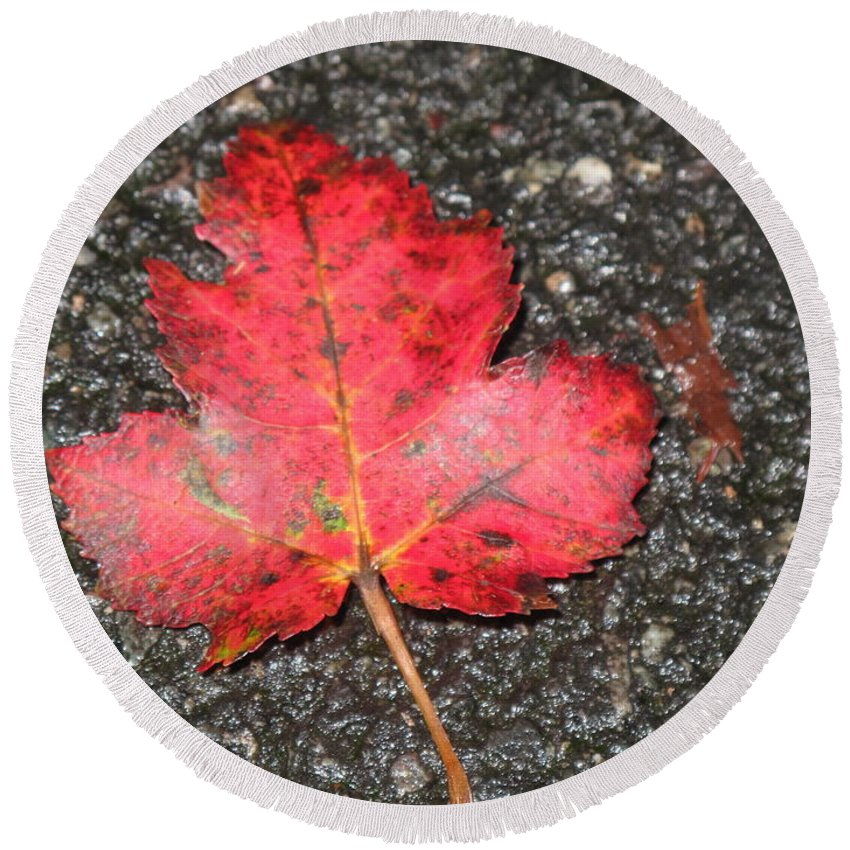 Leaves Round Beach Towel featuring the photograph Red Leaf On Pavement by Barbara McDevitt
