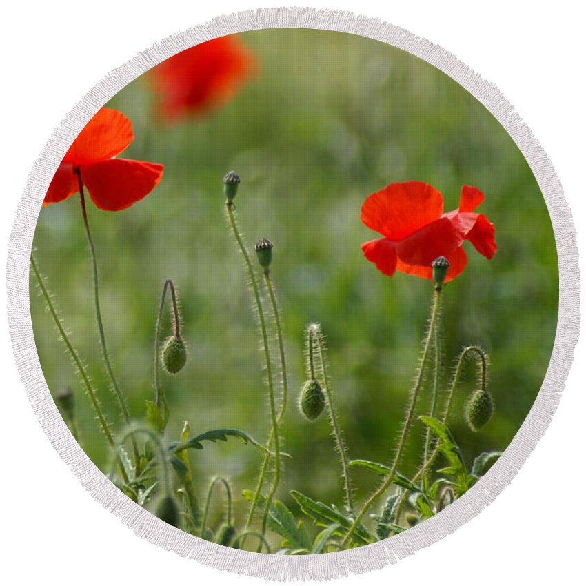 Poppies Round Beach Towel featuring the photograph Red Poppies 2 by Carol Lynch