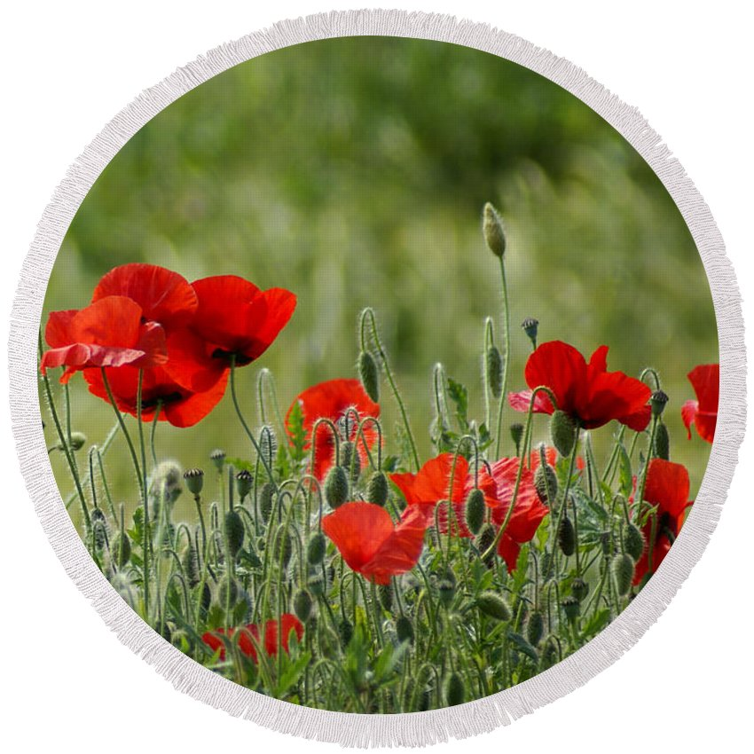 Poppies Round Beach Towel featuring the photograph Red Poppies 3 by Carol Lynch