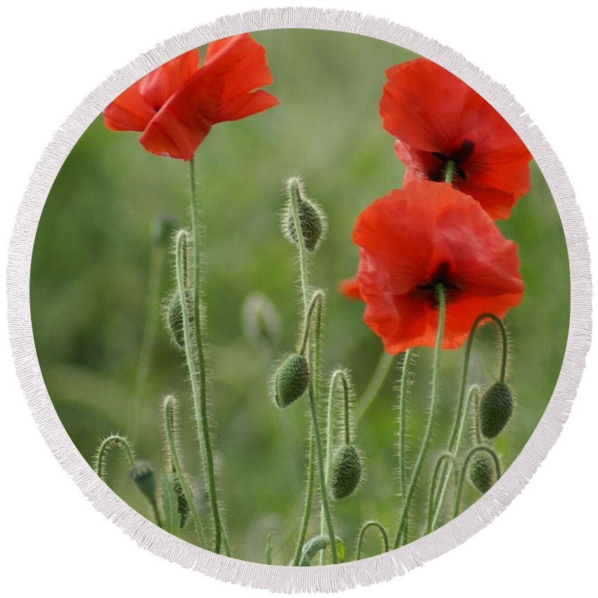 Poppies Round Beach Towel featuring the photograph Red Red Poppies 1 by Carol Lynch