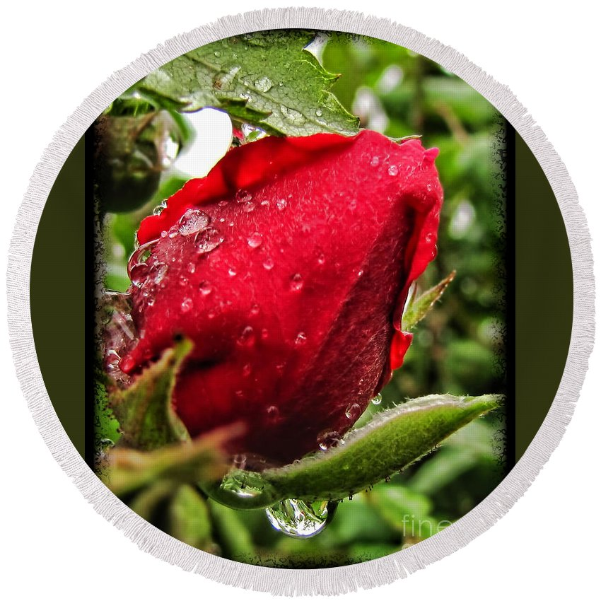 Plants Round Beach Towel featuring the photograph Red Rose Bud With Water Drops by Debbie Portwood