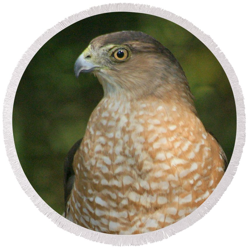 Hawk Round Beach Towel featuring the photograph Red-shouldered Hawk by Larry Allan