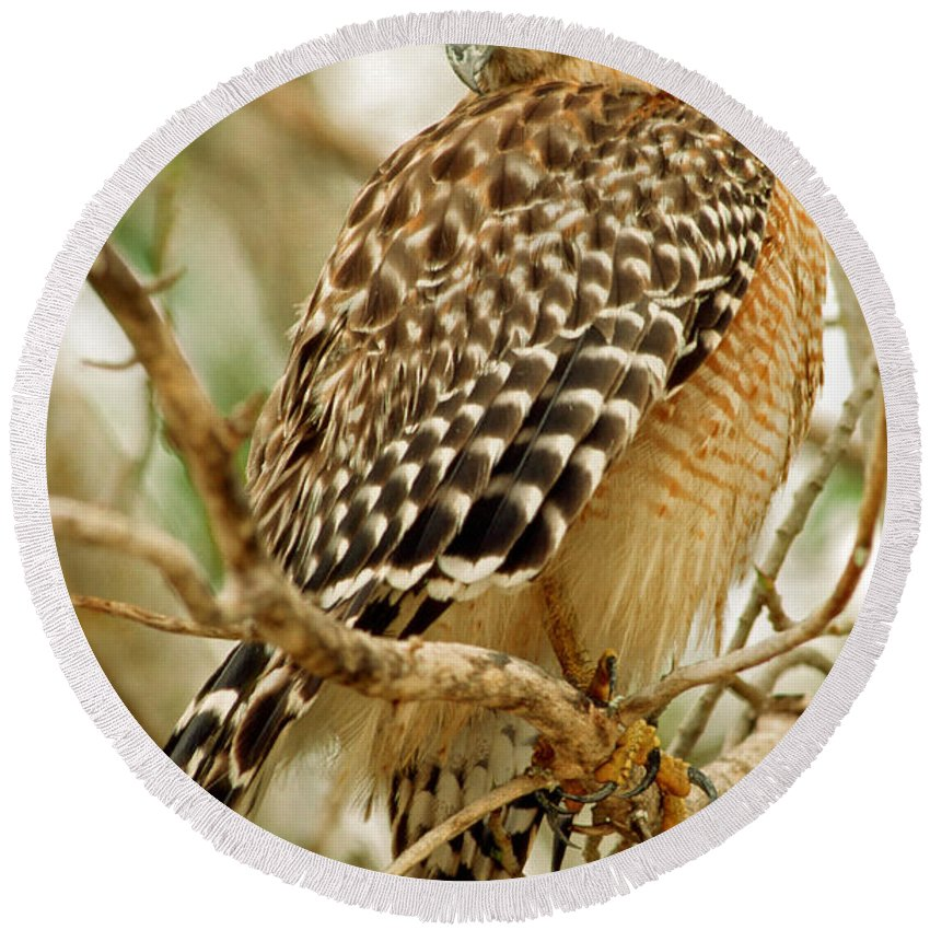 Red Shouldered Hawk Round Beach Towel featuring the photograph Red Shouldered Hawk by Millard H. Sharp