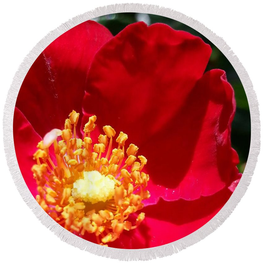 Red Round Beach Towel featuring the photograph Red Shrub Rose by Caryl J Bohn