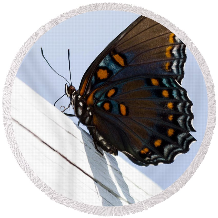 Bug Round Beach Towel featuring the photograph Red Spotted Purple by Gaurav Singh