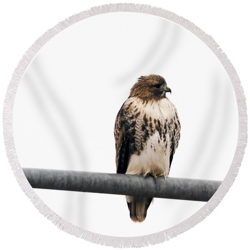 Wildlife Round Beach Towel featuring the photograph Red Tail Hawk On Light Pole by Edward Peterson