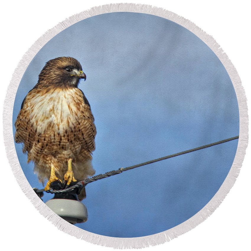 Hawk Round Beach Towel featuring the photograph Red Tail On Watch by Priscilla Burgers