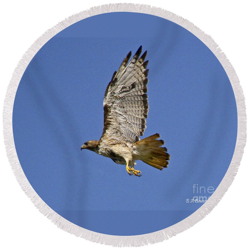 Red-tailed Hawk Round Beach Towel featuring the photograph Red-tailed Hawk Takeoff by Barbara Bowen
