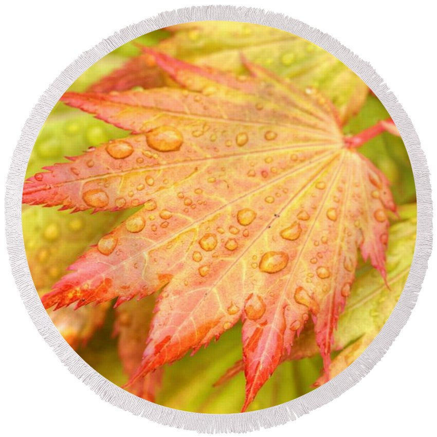 Red Round Beach Towel featuring the photograph Red Tip Leaf by Tap On Photo