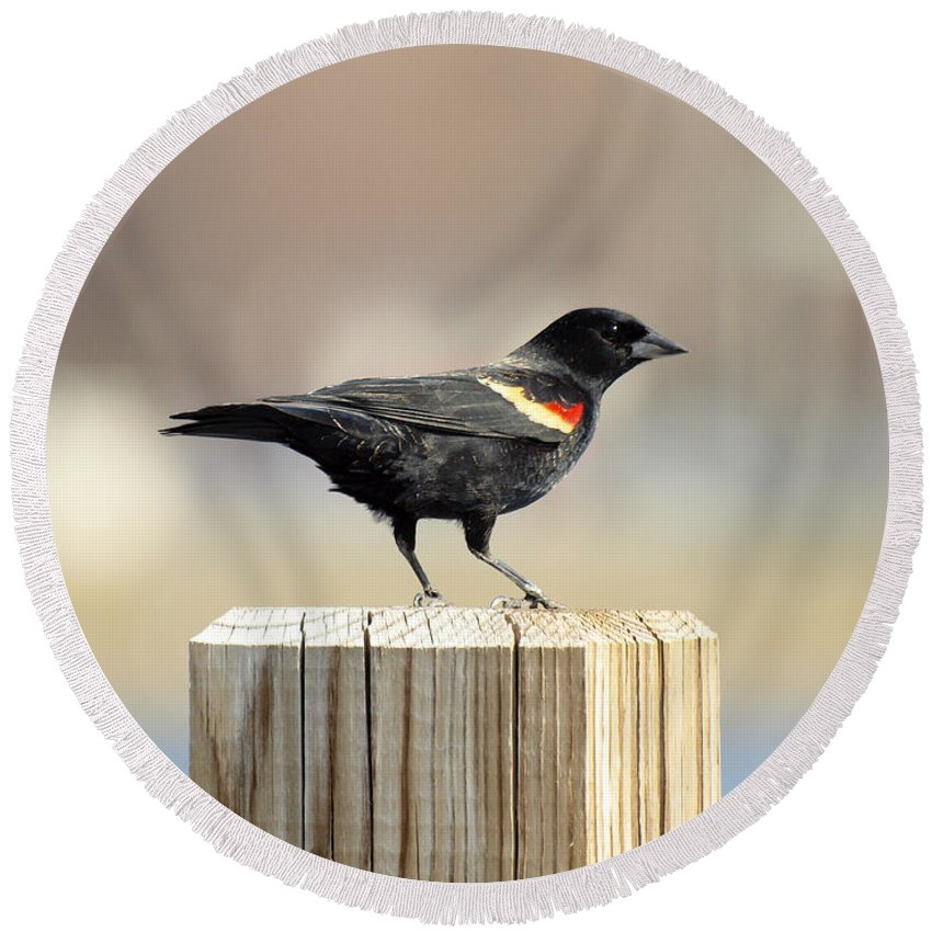 Red Winged Blackbird Round Beach Towel featuring the photograph Red Winged Blackbird by Thomas Young