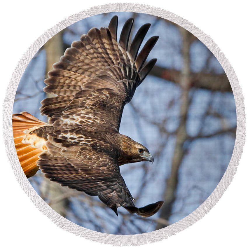 Redtail Hawk Round Beach Towel featuring the photograph Redtail Hawk by Bill Wakeley
