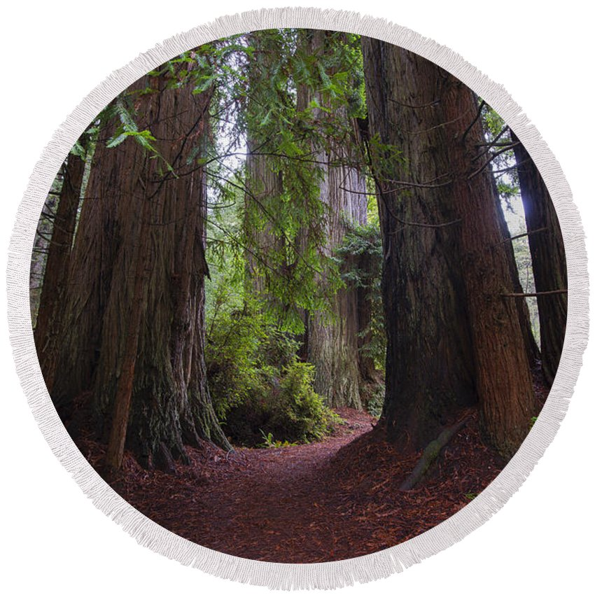 Redwood National Park Round Beach Towel featuring the photograph Redwood by Yefim Bam