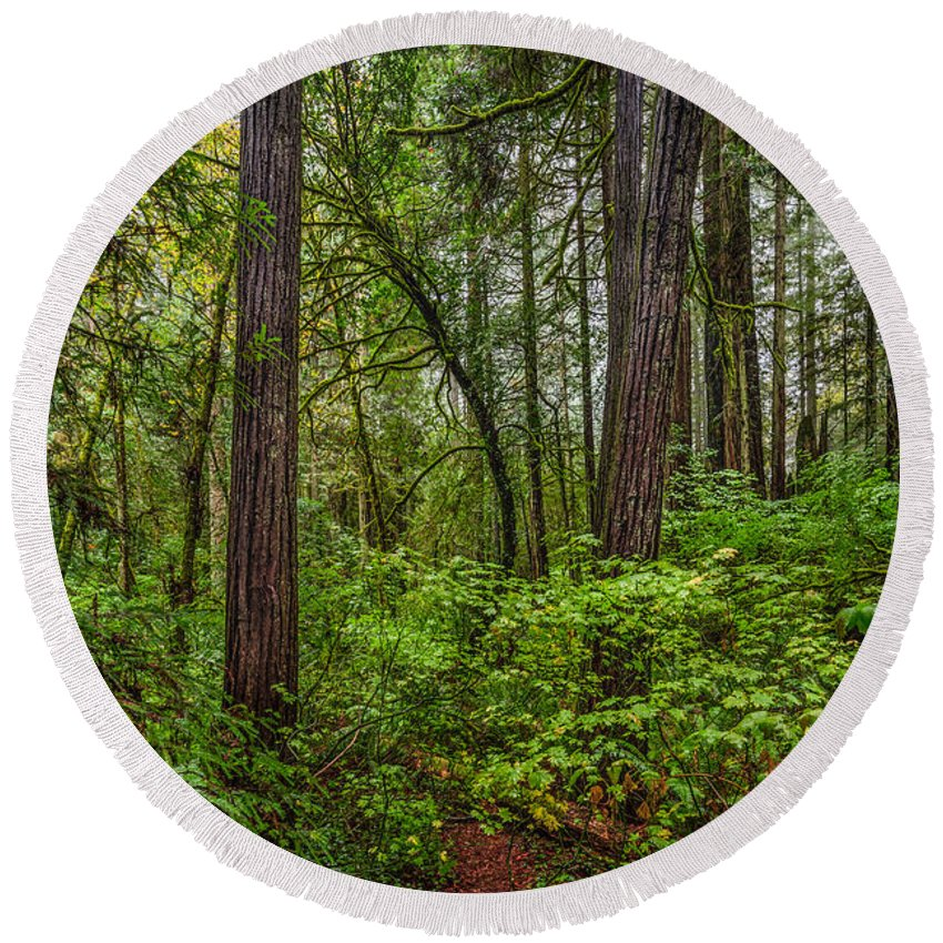 Copyrighted Round Beach Towel featuring the photograph Redwoods 2 by Mike Penney