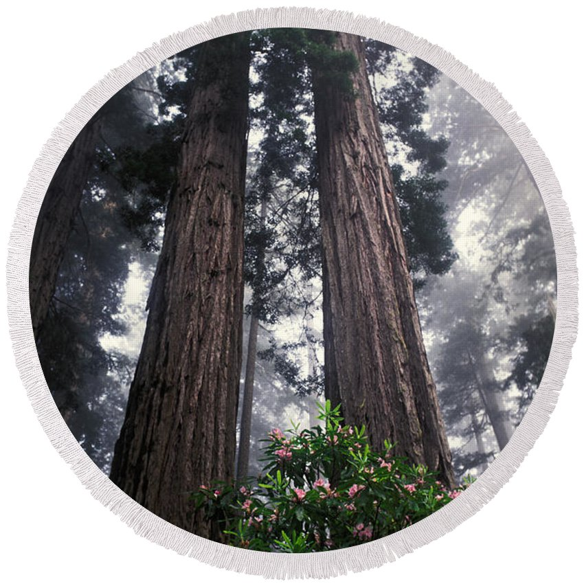 Plant Round Beach Towel featuring the photograph Redwoods by Ron Sanford
