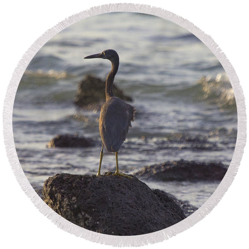 Reef Egret Round Beach Towel featuring the photograph Reef Egret by Douglas Barnard