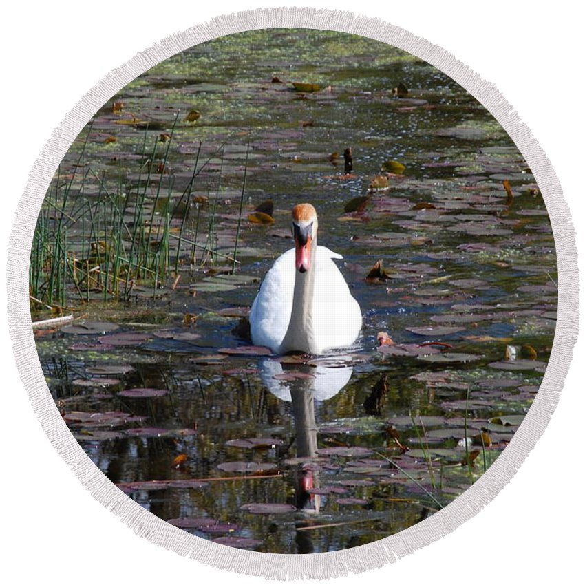 Nature Round Beach Towel featuring the photograph Reflected Beauty by Lynn Rae