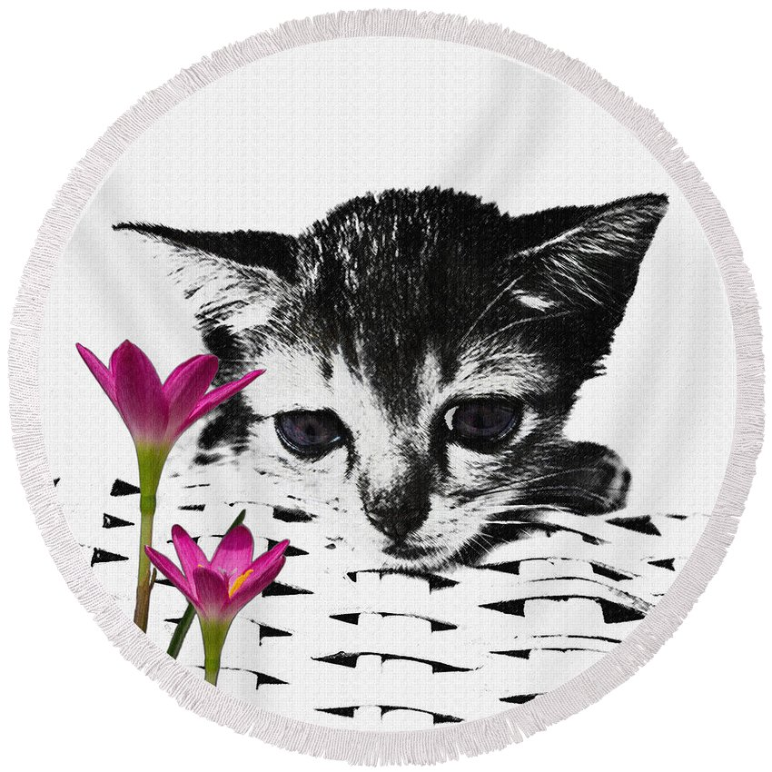Kitten Round Beach Towel featuring the photograph Reflecting Kitten by Nola Lee Kelsey
