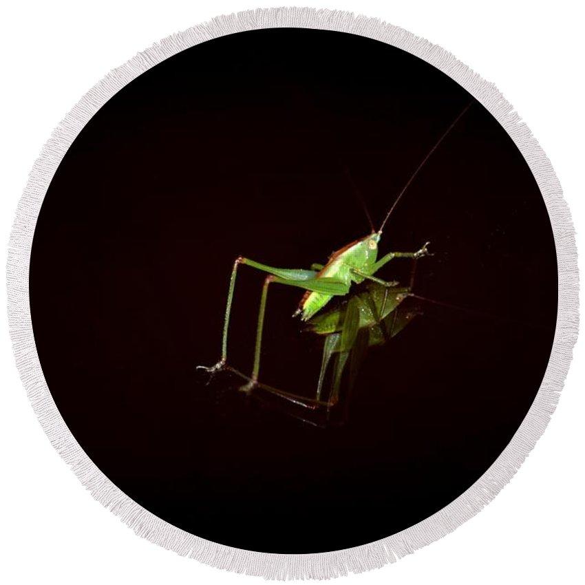 Reflection Of A Grasshopper Round Beach Towel featuring the photograph Reflection Of A Grasshopper by Maria Urso
